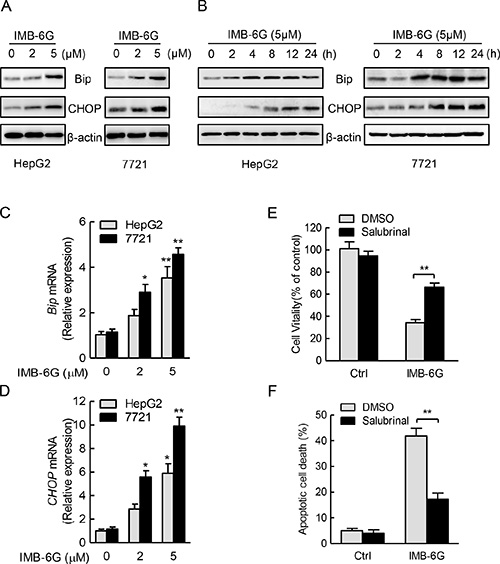 IMB-6G triggers ER stress in HCC cells.