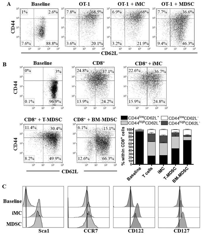 MDSC impairs activated CD8