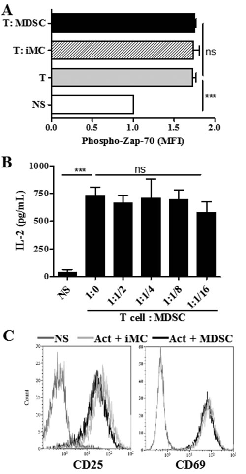 MDSC does not impair T cell receptor associated signaling.
