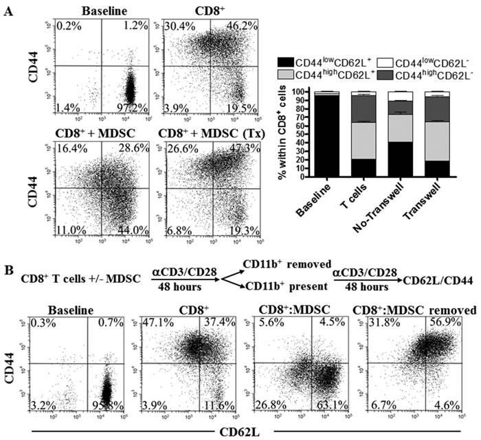 MDSC impair CD8