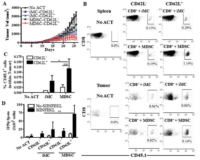 MDSC-conditioned CD62L