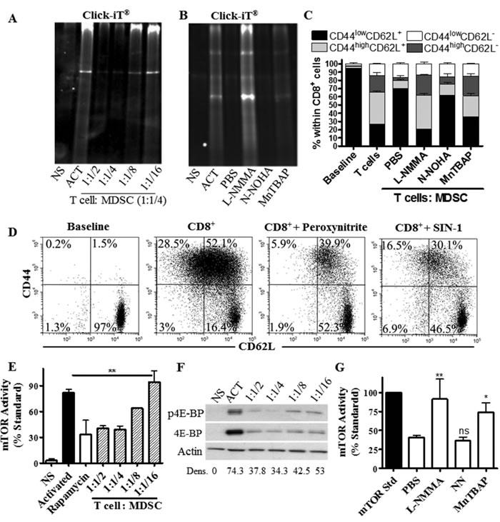 T cells limit