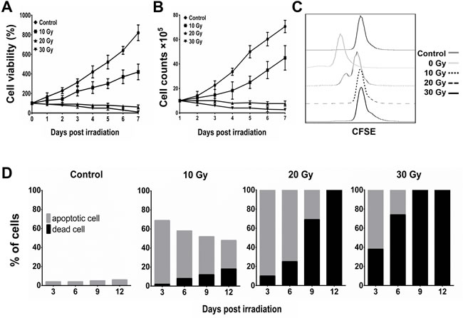 Inhibition of proliferation and induction of apoptosis of BA15 by γ-ray irradiation.