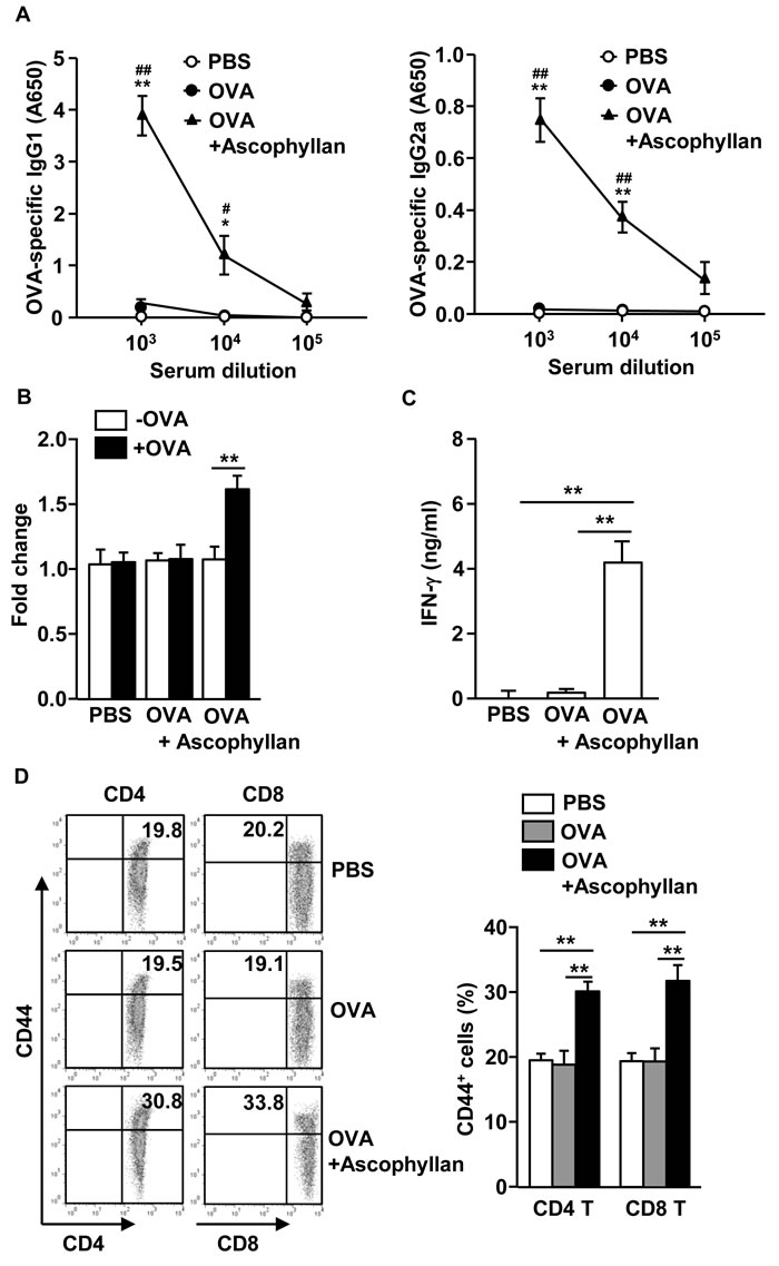 Ascophyllan provides an adjuvant effect on OVA-induced B and T cell responses.