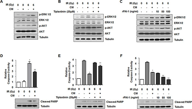 Secreted extracellular PAI-1 increases radioresistance of NCI-H460 cells through AKT and ERK1/2 activation and caspase-3 inhibition.