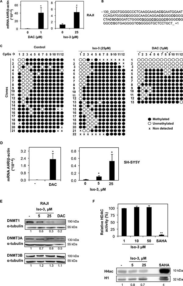 Iso-3 increases AHR expression and induces AHR promoter demethylation.