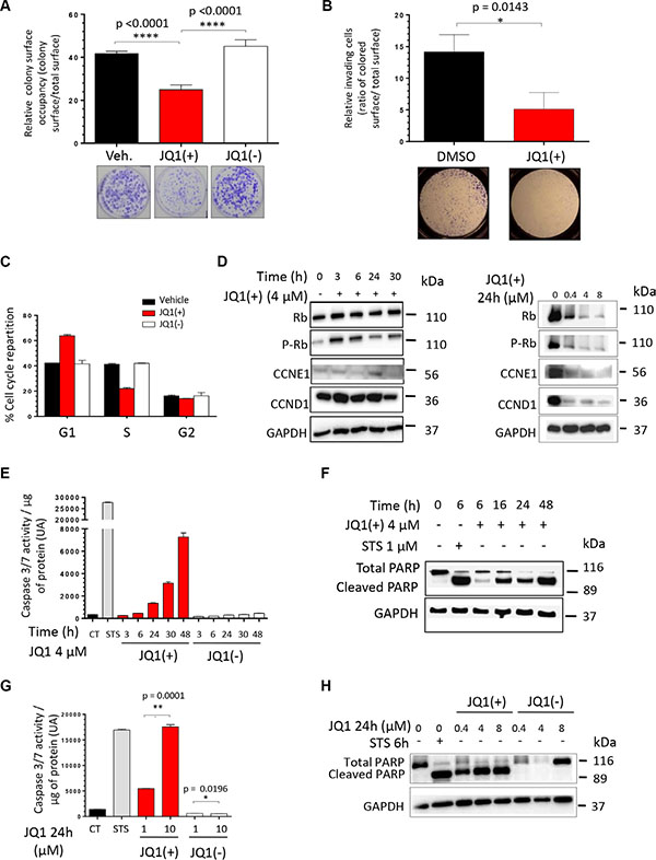JQ1 inhibits the clonogenicity, the migratory potential and induces both a G1-phase cell cycle arrest and the apoptosis of human Ewing Sarcoma cell lines.