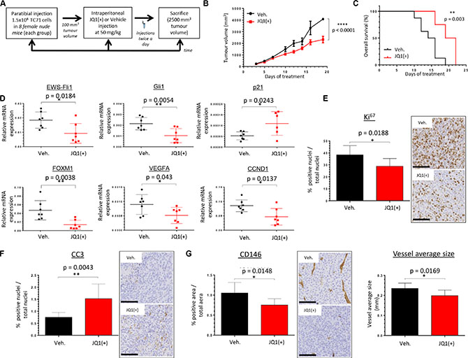 JQ1(+) significantly delays tumor growth in TC71 xenograft model and prolongs cancer-specific survival.