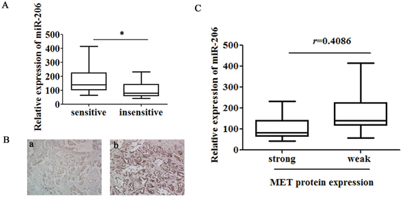 Low expression of miR-206 in lung adenocarcinoma tissues correlates with increased cisplatin resistance and MET expression.