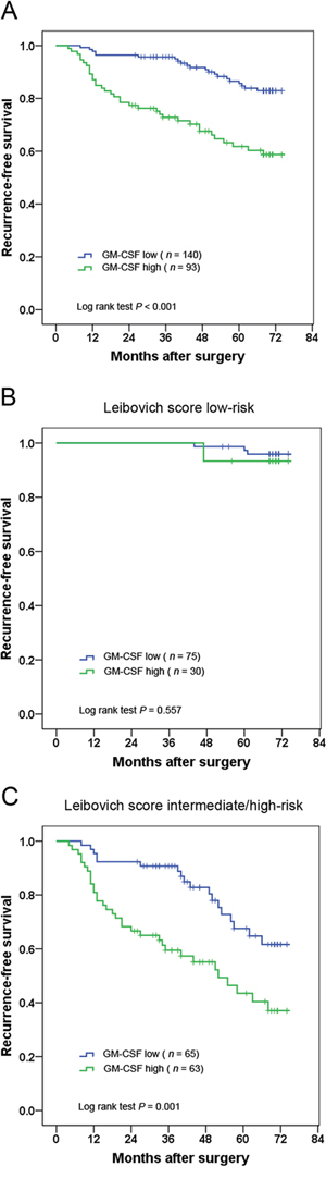 Kaplan–Meier analysis for recurrence-free survival (RFS) of clinically localized ccRCC patients according to intratumoral GM-CSF expression.