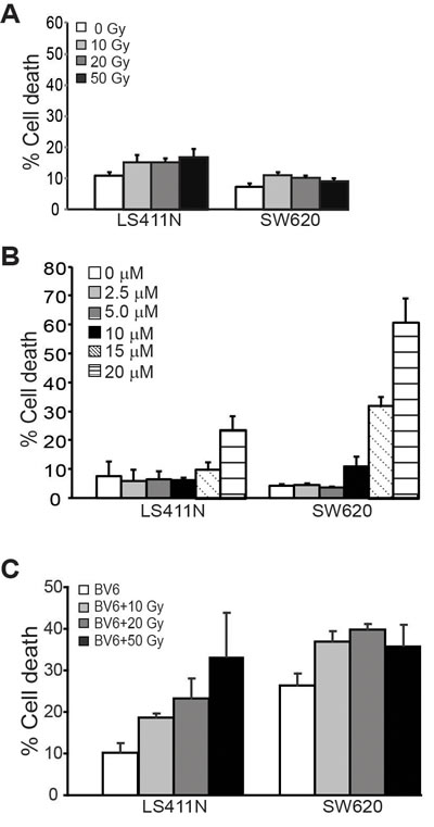 BV6 increases the sensitivity of human colon carcinoma cells to radiation-induced cell death.