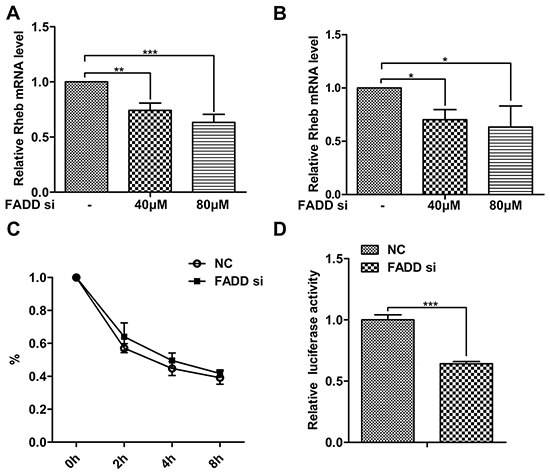 FADD interference decreased Rheb expression on the transcriptional level.
