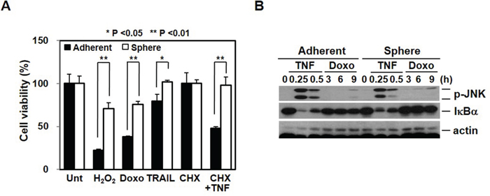 Chemoresistance is associated with cancer stem cell-like properties and EMT.
