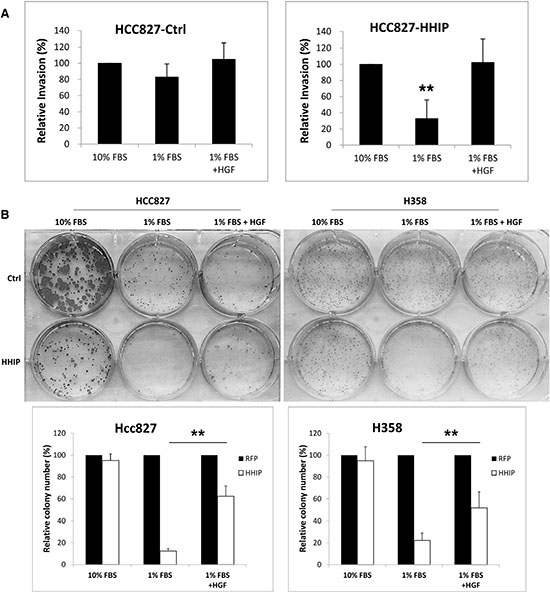 HGF treatment recovered the clonogenicity and invasion activities that were suppressed in LAC cells overexpressing HHIP in serum-starvation state.