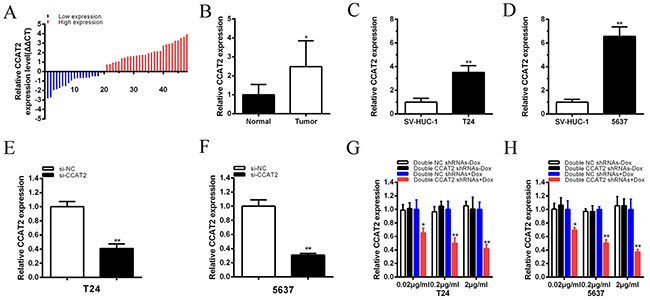 qRT-PCR method was used to detect CCAT2 mRNA level.