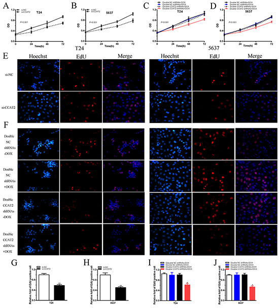 Cell growth was suppressed after transfection of special RNA or tetracycline-inducible shRNA vectors.