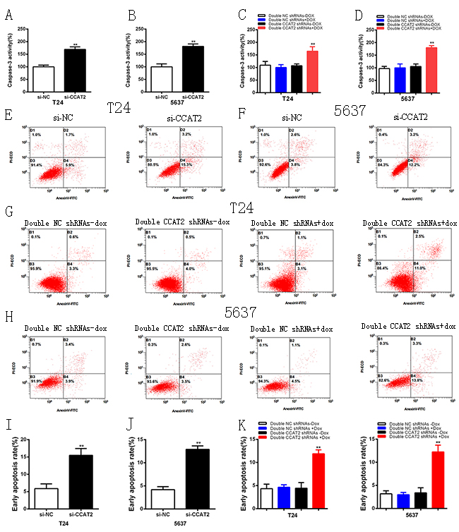 Apoptosis was induced after transfection of special RNA or double tetracycline-inducible shRNAs vectors using ELISA and flow cytometry assay.