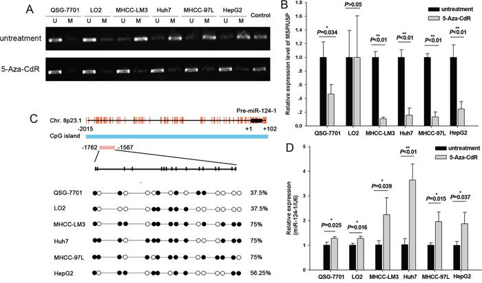 Methylation of miR-124-1 promoter in HCC cells.