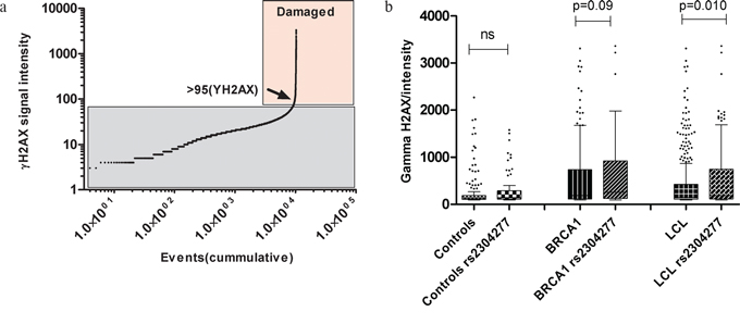 a. Threshold of γH2AX nuclear intensity damage.