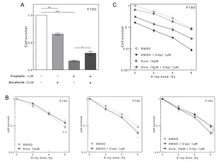 Effect of sorafenib on NF.