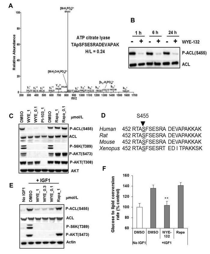 ACL is an mTOR regulated phosphoprotein.