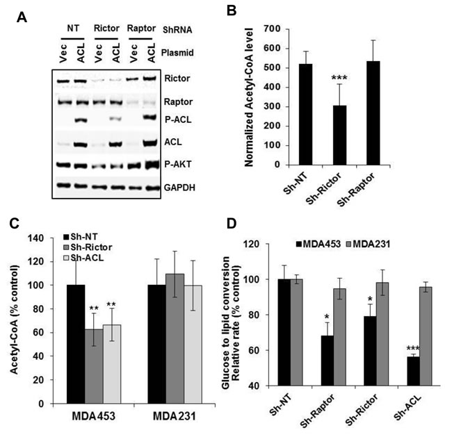mTORC2 but not mTORC1 is required for ACL-catalyzed production of acetyl-CoA.