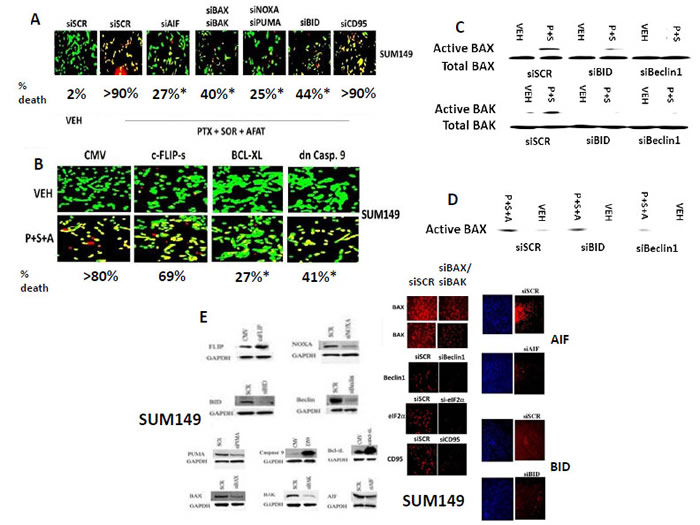 Knock down of [BAX + BAK], [NOXA + PUMA], AIF or over-expression of BCL-XL protects tumor cells from [pemetrexed + sorafenib + afatinib] toxicity.
