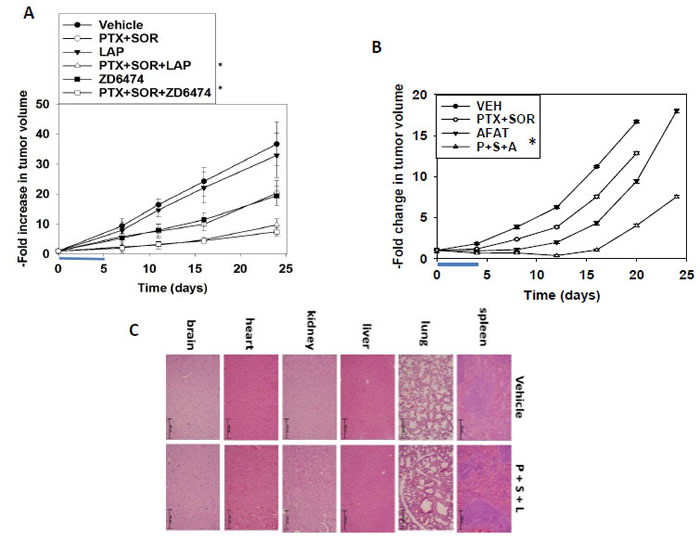 [Pemetrexed + Sorafenib] treatment extends animal survival and is enhanced by inhibition of ERBB1/2 signaling.