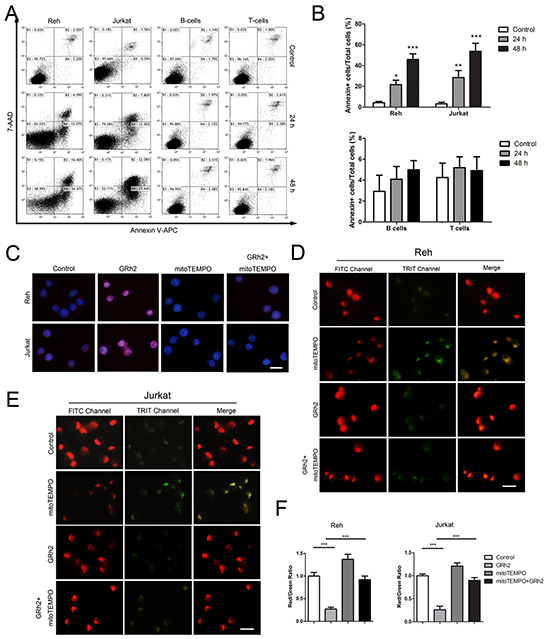GRh2 induces mitochondria-dependent apoptosis in ALL cells.