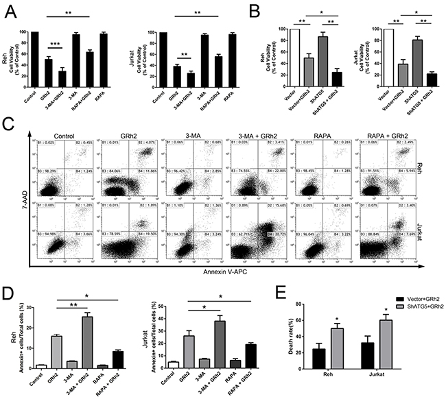 Autophagy is involved in 20(S)-GRh2-induced toxicity in ALL cells.