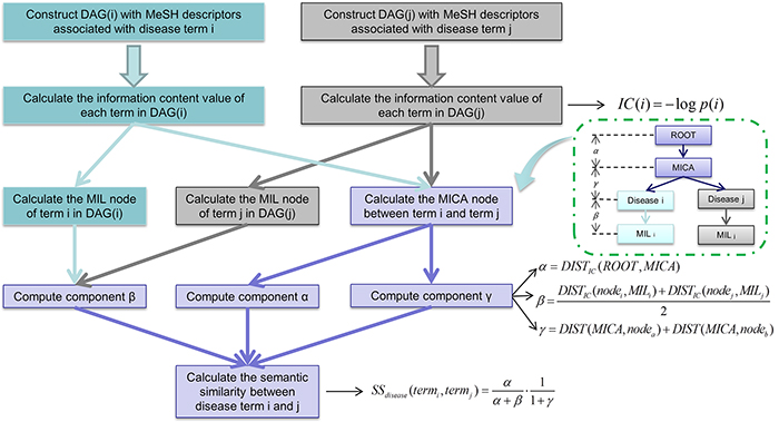 Flowchart of disease semantic similarity function in ILNCSIM based on disease DAGs.