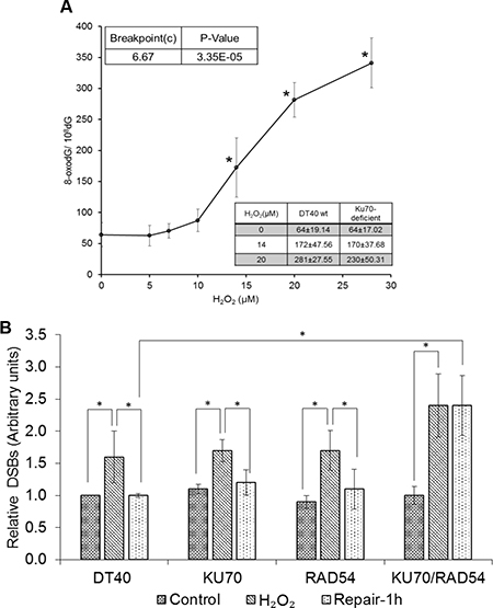 DNA damage induced by low levels of H2O2.