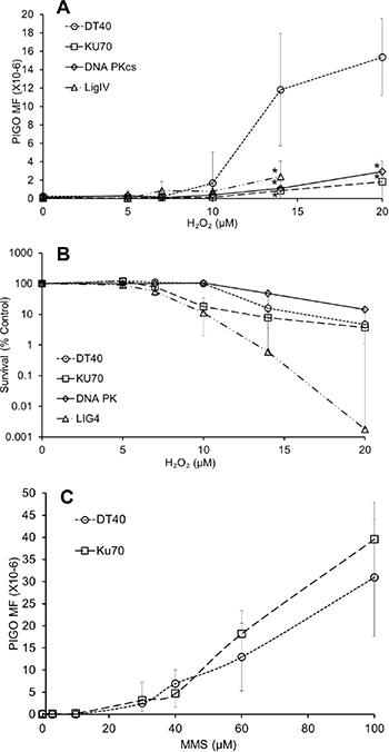 NHEJ plays a predominant role in oxidative stress-induced mutagenesis.