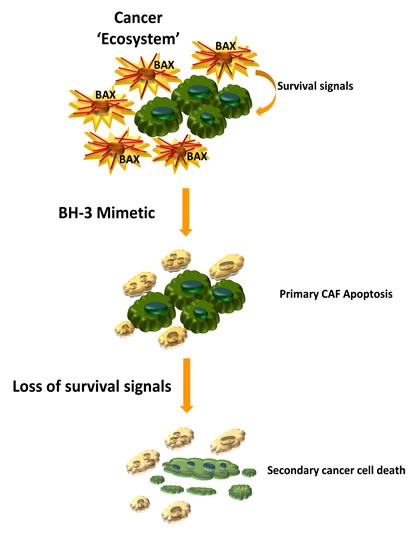 Therapeutic deletion of CAF for the treatment of highly desmoplastic human cancers.