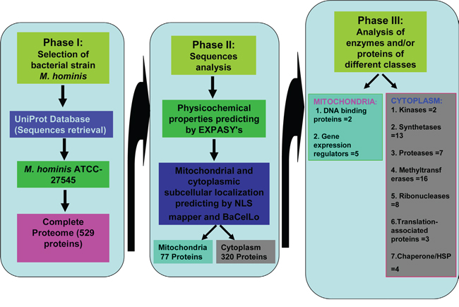 Summary of possible functions of Mycoplasma hominis proteins targeted to mitochondria and cytoplasm of the host cells in development of prostate cancer.