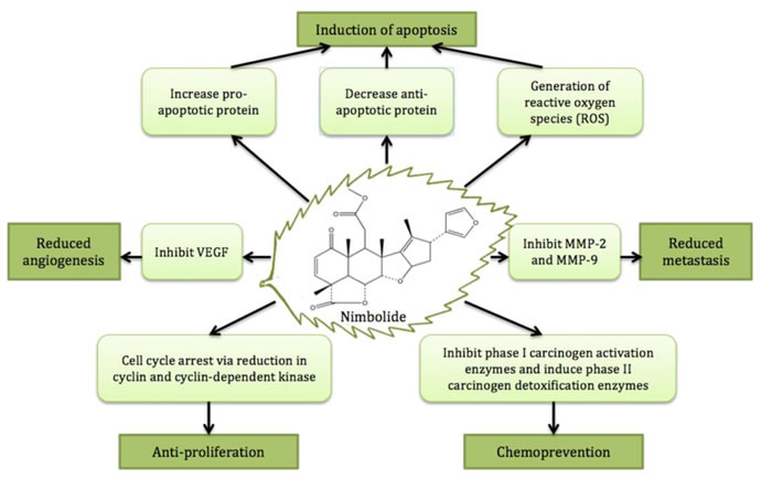 The major anticancer activities and cancer preventive effect of nimbolide.