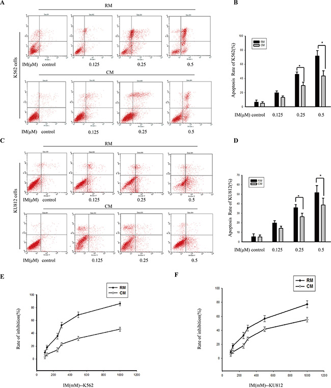The effects of CM on attenuating IM-induced apoptosis in K562 cells and KU812 cells.