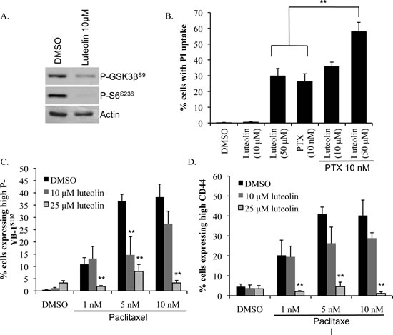 Luteolin prevents enrichment for CD44+ cells by paclitaxel.