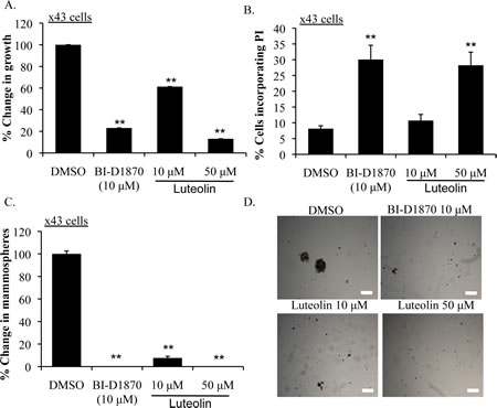 Luteolin inhibits growth and induces apoptosis in primary human TNBC.