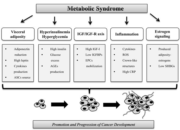 Mechanisms that increase the risk of cancer in patients with metabolic syndrome.