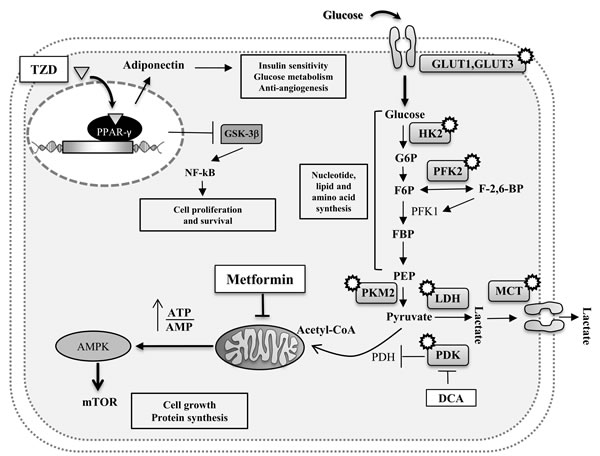 Potential intracellular pathways directly linking MetS with cancer.