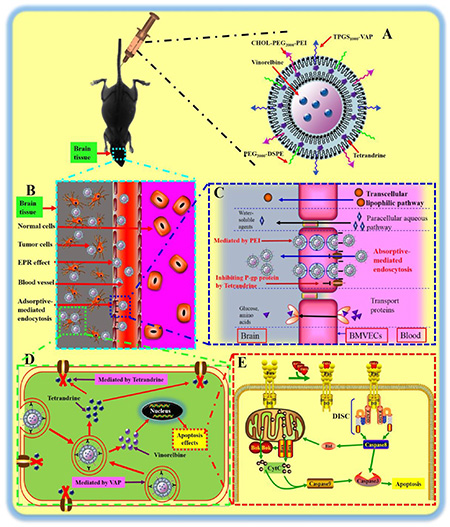 The enhanced antitumor effects of multifunctional targeting vinorelbine plus tetrandrine liposomes.
