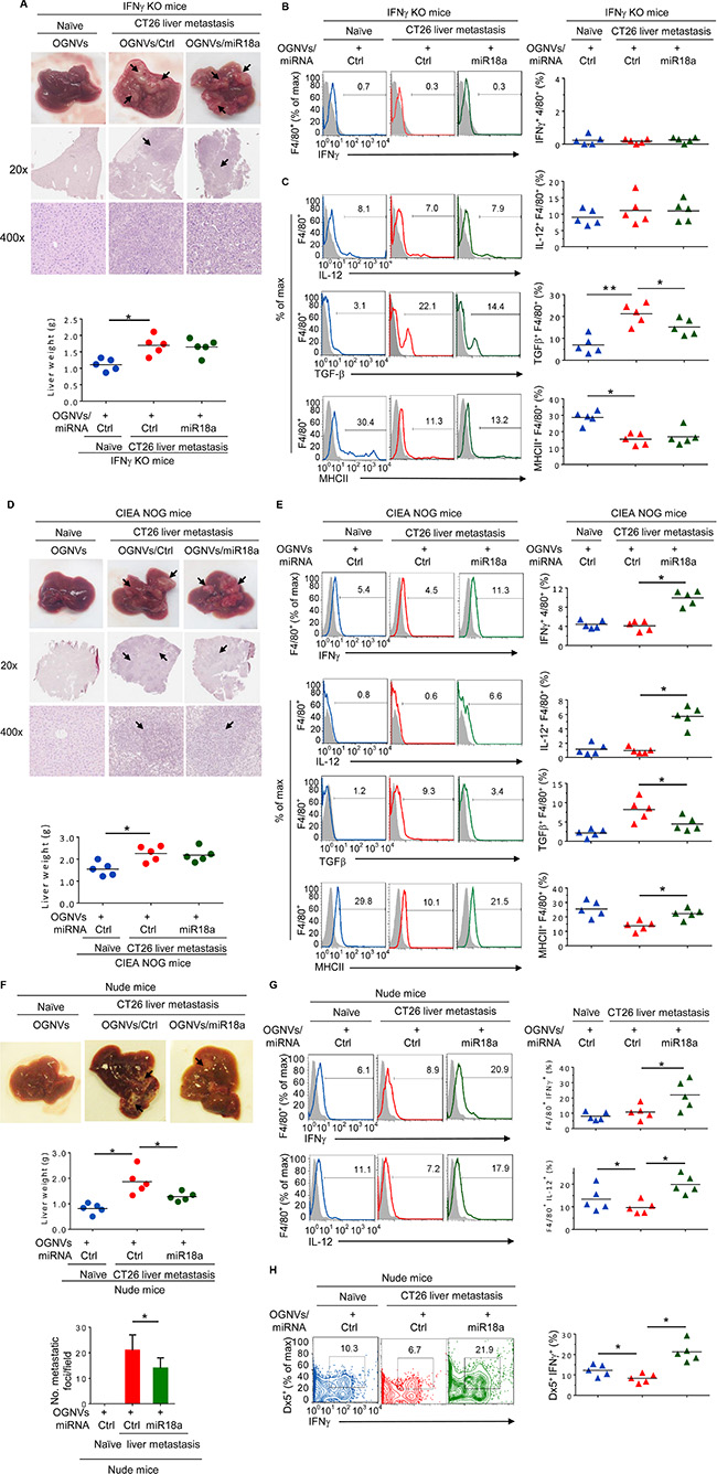 miR-18a mediated inhibition of the growth of liver metastasis of colon tumor cells is IFNγ dependent.