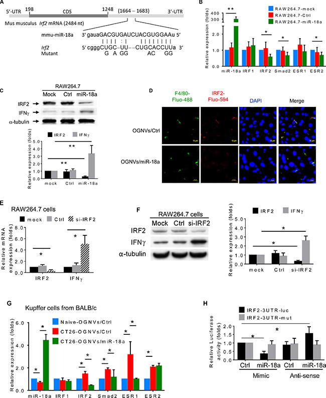 miR-18a suppresses liver metastasis of colon cancer triggered by direct targeting of Irf2 expressed in Kupffer cells.