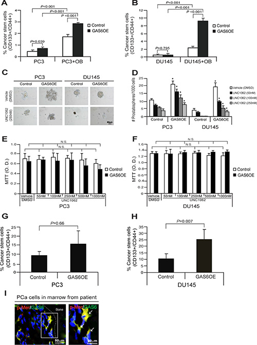 GAS6 overexpression increases CSCs through activation of Mer signaling in PCa cells.