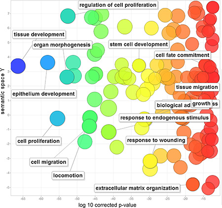 Gene ontology analysis of 212 human EMT-implicated genes with frequent CNGs.