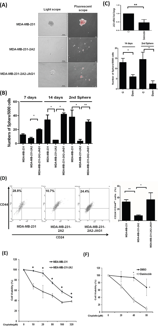 Knockdown of KDM2A reduced tumorsphere formation and enhanced cisplatin sensitivity.
