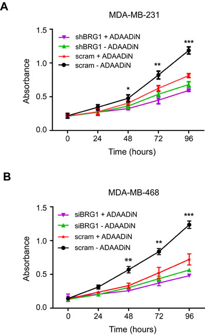 ADAADiN-mediated inhibition of triple negative breast cancer cell proliferation and viability is due to inhibition of BRG1.