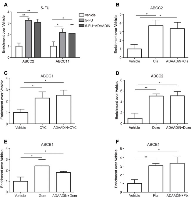 Chemotherapeutic drugs increased BRG1 binding at ABC transporter genes in a manner independent of ADAADiN.