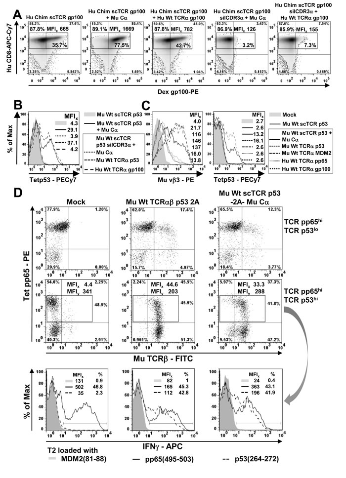 Mispairing of a scTCR with human TCRα takes place to less amounts in human T-cells.